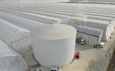 Invernadero de alta tecnología en Retamar