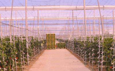 PLANTA DE ALMACENAMIENTO Y REGASIFICACIÓN DE CO2 LÍQUIDO EN ZOI AGRÍCOLA
