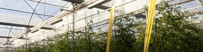 Soluciones Agricultura